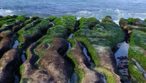 Mořská řasa a její benefity