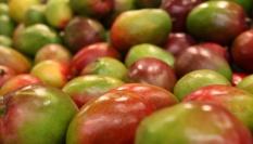 Mango proti volným radikálům