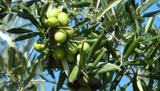 Hydratační banánová maska s olivovým olejem a žloutkem