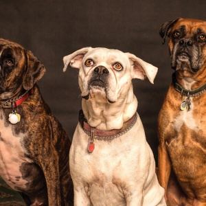 Ako vybrať najlepšie granule pre psa?