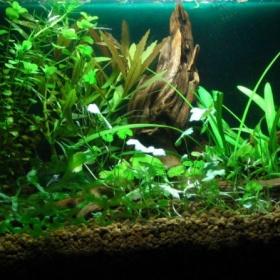 Rostlinky do akvária - foto č. 1