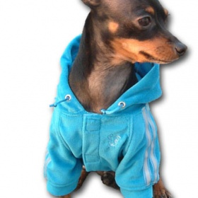 Adidas teplákovky, červený kabátek, fosforová tílka, dlouhé svetry, mikinky na malé psy - foto č. 1