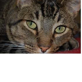Daruji kočičku - foto č. 1