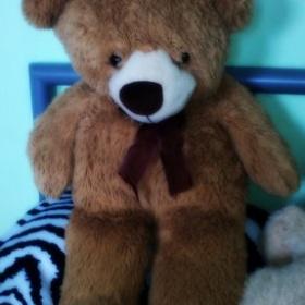 Medvídek - foto č. 1